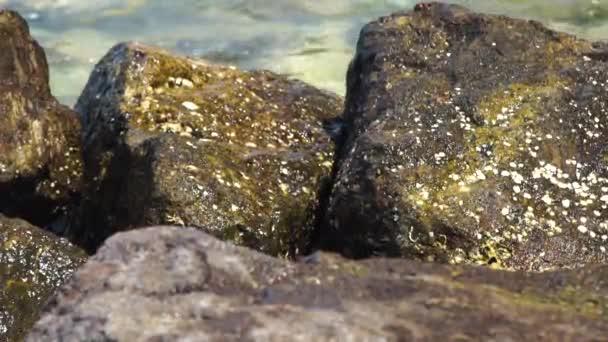 Velké kameny na pozadí šplouchání mořských vln. Vlny oceánu s šplouchá na vlhkých kamenech na beachstony pobřeží a průsvitného moře zázemí