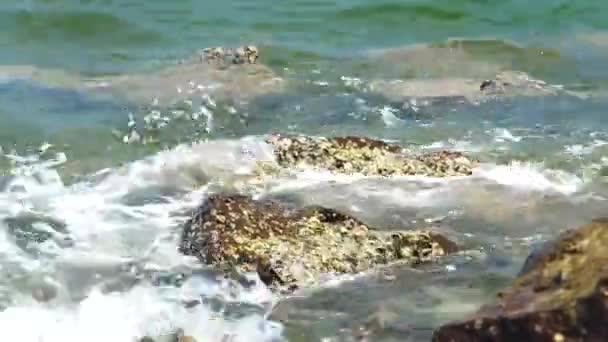 Vodní vlny stříkající na velké kameny pokryta mušle na pláži moře. Vlny oceánu s pěnou na skalnaté pláži