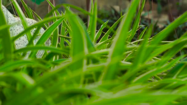 Green foliage of plants in outdoor garden. Close up green leaves of decorative plants in tropical garden.