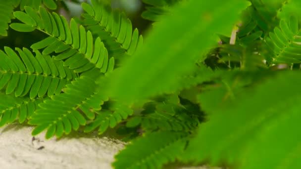Zelené listy a větve stromů zblízka. Zelené listy listy tropických rostlin písek pozadí.