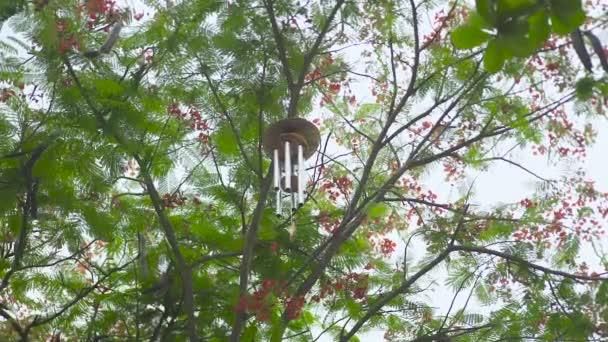 Vítr zvonkohry, visí na stromě v zahradě. Feng shui bell vítr ve větvích stromu. Feng shui symbolem koncepce