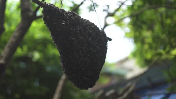 Včelí úl včelí med v létě Zahrada zblízka. Divoká vosa vytvořit předsazení podregistr v lese džungle