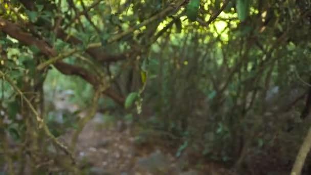 Szempontból cserjések trópusi erdő séta közben. Zöld lomb- és a vad dzsungel trópusi fák ágai