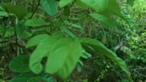 Zelené houštiny tropických stromů v divokého lesa. Zelené listí a větve tropických rostlin a stromů deštného pralesa pohledu