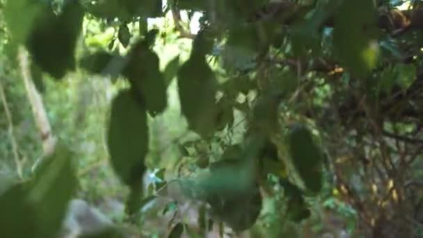Hlediska walking prostřednictvím zelené houštiny tropického lesa. Zelené listí a větve tropickými stromy a liány v divoké džungli.