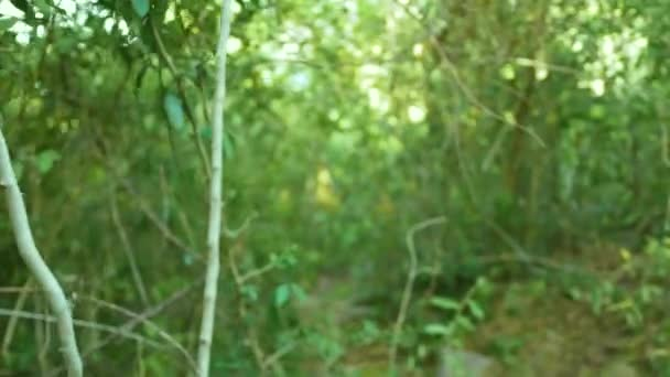 Zöld cserjések liana fák és növények a trópusi erdő. Zöld lomb- és a vad dzsungel szempontból trópusi fák ágai.