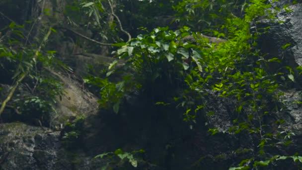 Piante verdi in foresta pluviale tropicale. Belle piante in natura selvaggia giungla foresta e creek acqua che scorre sulla pietra. Paesaggio tropicale della giungla.