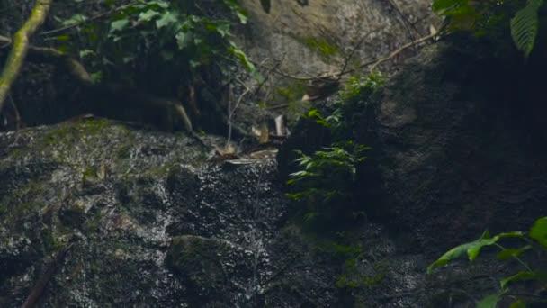 Proud vody Creek teče om skály v divoké tropický prales. Creek voda teče jako řeka v horských a džungle lesní krajina