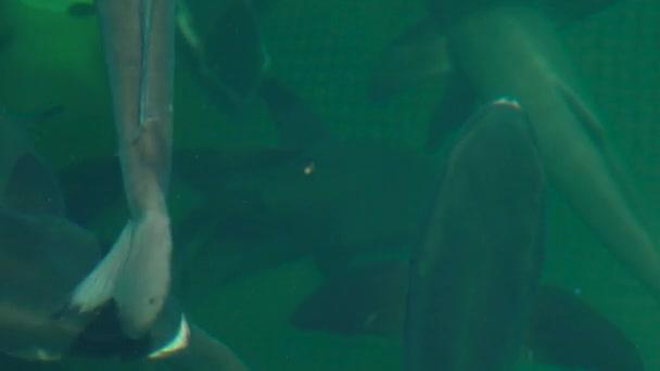 Közelről tengervíz gazdaságban úszó hal. Tenyésztés és termesztés, haltenyésztés nyílt tengeri víz tér.