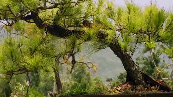 Zblízka zelené jehličnatý strom na horské krajiny. Jehličnaté smrk v létě horský Les