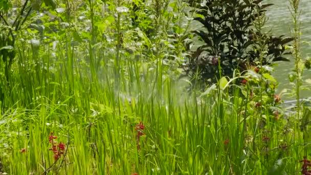 Lawn Sprinkler Bewässerung mit Wasser grün und Blumen im Sommergarten. Nahes hohes Wasser Sprinkler Bewässerung Rasen und Blumen auf der Wiese im Garten