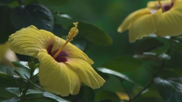 Sárga rügyek virágzó virágok kert közelről nyáron. Sárga virágok virágzó kert virágzó.
