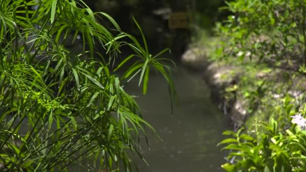 Zöld háttér tó víz nyári kert növény. Zöld lomb nyári növény és dekoratív kerti tó. Nyári táj design.