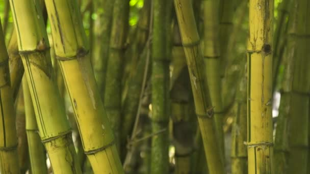 Close up stem of bamboo in jungle forest. Background green trunk of sugar cane tree in tropical rainforest.