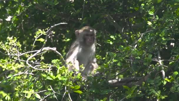 Roztomilé opice sedící na větvi stromu v zeleném lese. Zblízka opice na větvi tropický deštný prales. Divoké zvíře v přírodě.