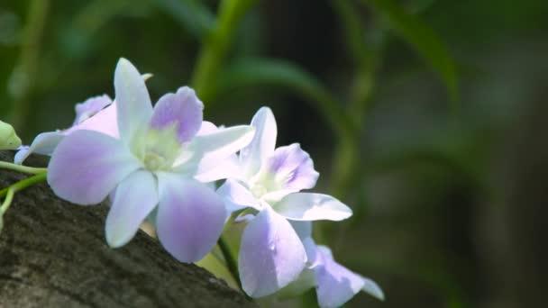 Gyönyörű fehér virágok orchideák rainforest közelről. Nyári kert virágzó trópusi orchidea. Vad virág, a dzsungel növény és a természet.