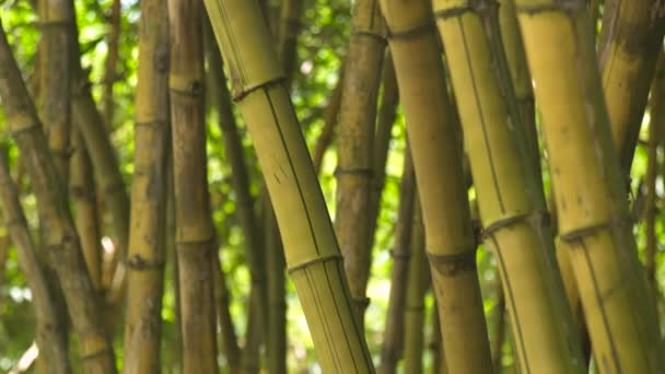Close up stem of sugar cane in jungle forest. Background green trunk of bamboo tree in tropical rainforest