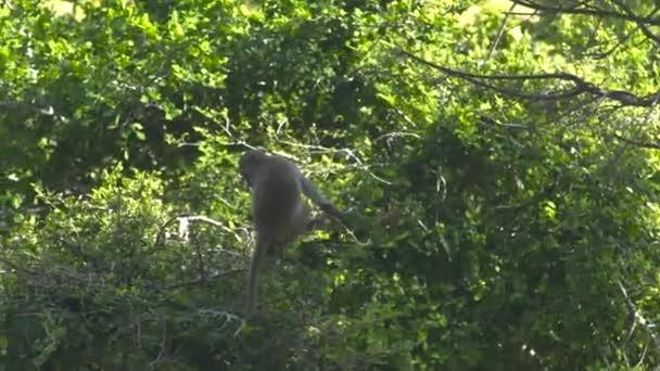 Malá opička na zelených větví v deštném pralese. Zblízka opice sedící na větvi tropického stromu v džungli. Divoké zvíře v přírodě.