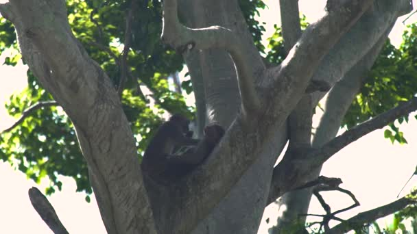 Monkey couple cleaning fur on tree branch in green tropical forest. Close up monkey couple on tree in rainforest in jungle. Wild animal in nature.
