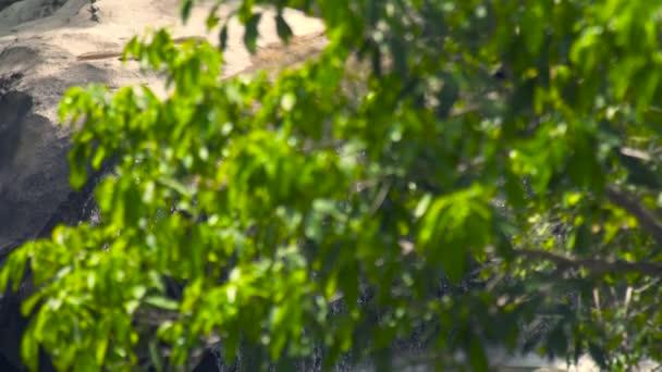 Letní les a rocky řeka tekoucí na horský vodopád. Zelené listy v deštných pralesů a kamenité vodopád horského lesa. Rocky řeka v džungli
