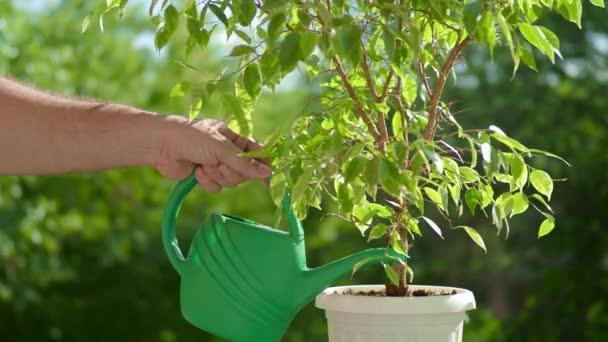 mužské ruky zalévání květiny na balkon při západu slunce, Close Up. K nepoznání muž zalévání rostlin na večerní terase.
