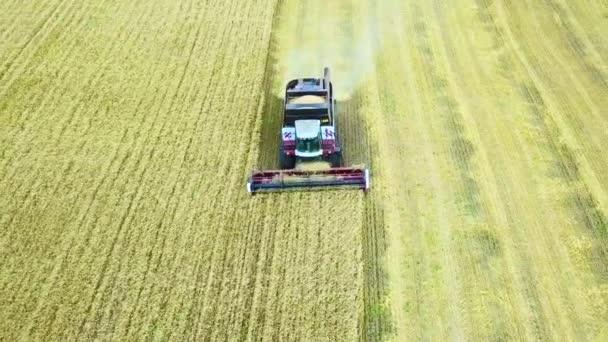 Velký kombajn se chystá uvolnit obilí, protože kontejner kombajn je plný obilí. Letecký pohled. Létání nad zlaté pšeničné pole.