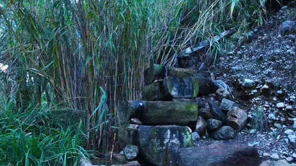 Horský potok potok vody lesní deštivé pohled