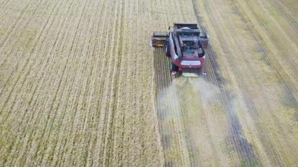 Vista aerea di combine moderna raccolta del grano sul campo. Volare direttamente sopra il combine. Vista dallalto. Scena di agricoltura.
