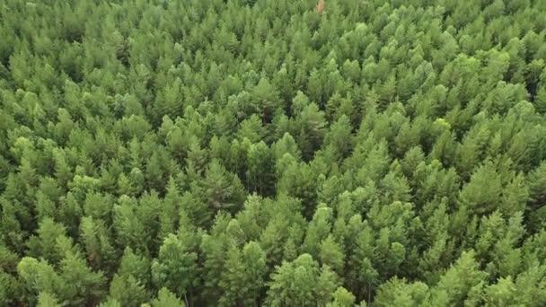 Let dronem nad zeleným lesem. Horní pohled.