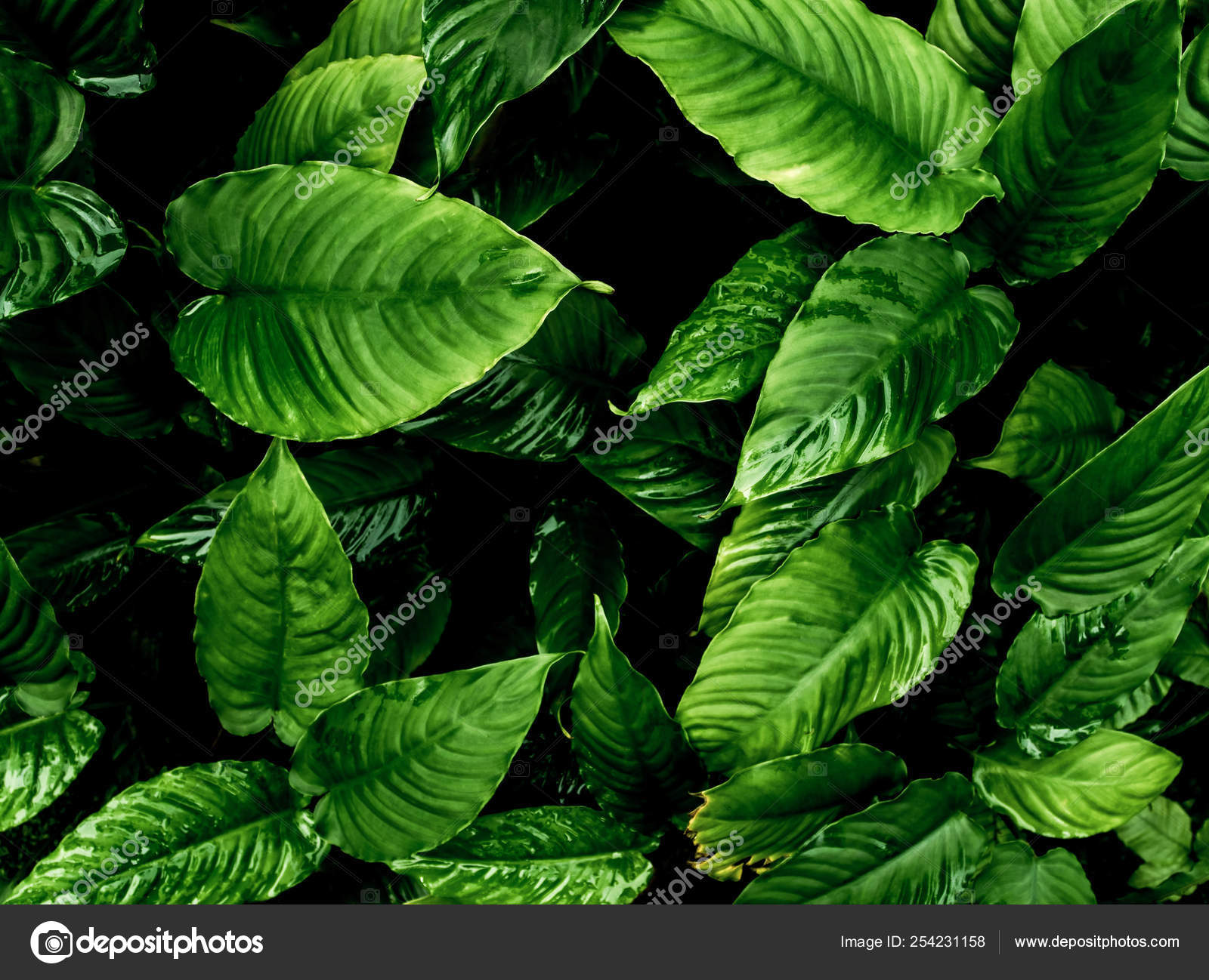 Freshness Tropical Leaves Surface In Dark Tone As Rife Forest Ba Stock Photo C Satakorn S 254231158 Land areas approximately bounded by the tropic of cancer and capricorn, but possibly affected by other factors such as prevailing winds. https depositphotos com 254231158 stock photo freshness tropical leaves surface in html