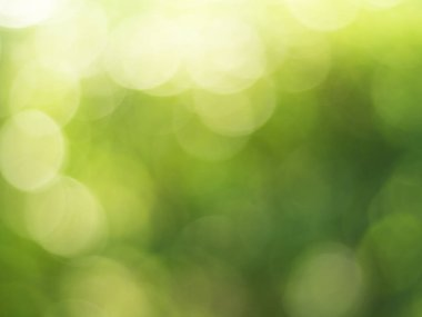 Lights and Green with yellow bokeh on nature defocus abstract blur background. Abstract background yellow and green tones of natural outdoors bokeh