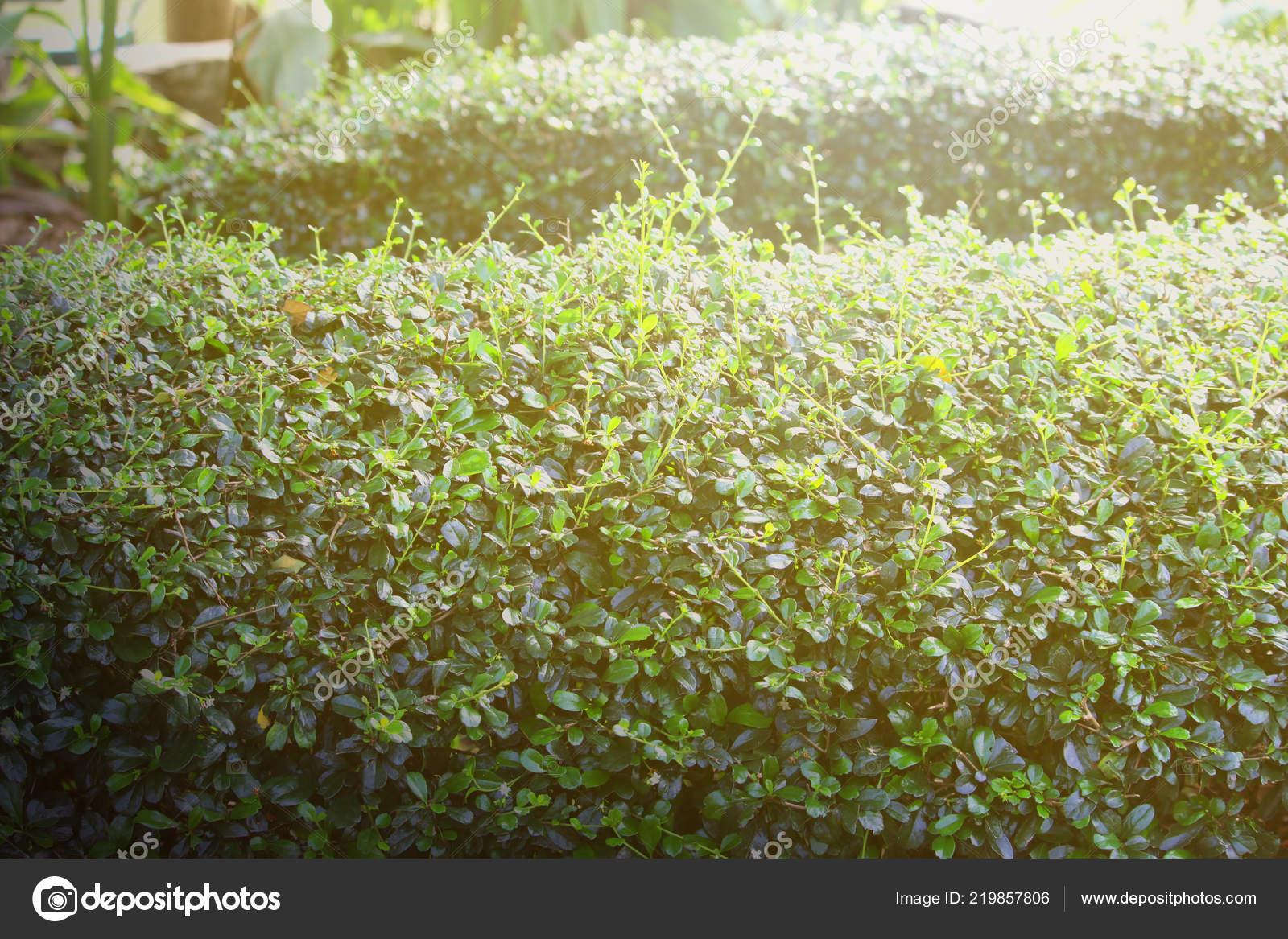 Yaprak Yeşil Doğa Manzarası Doğa Arka Plan Stok Foto Achirathep
