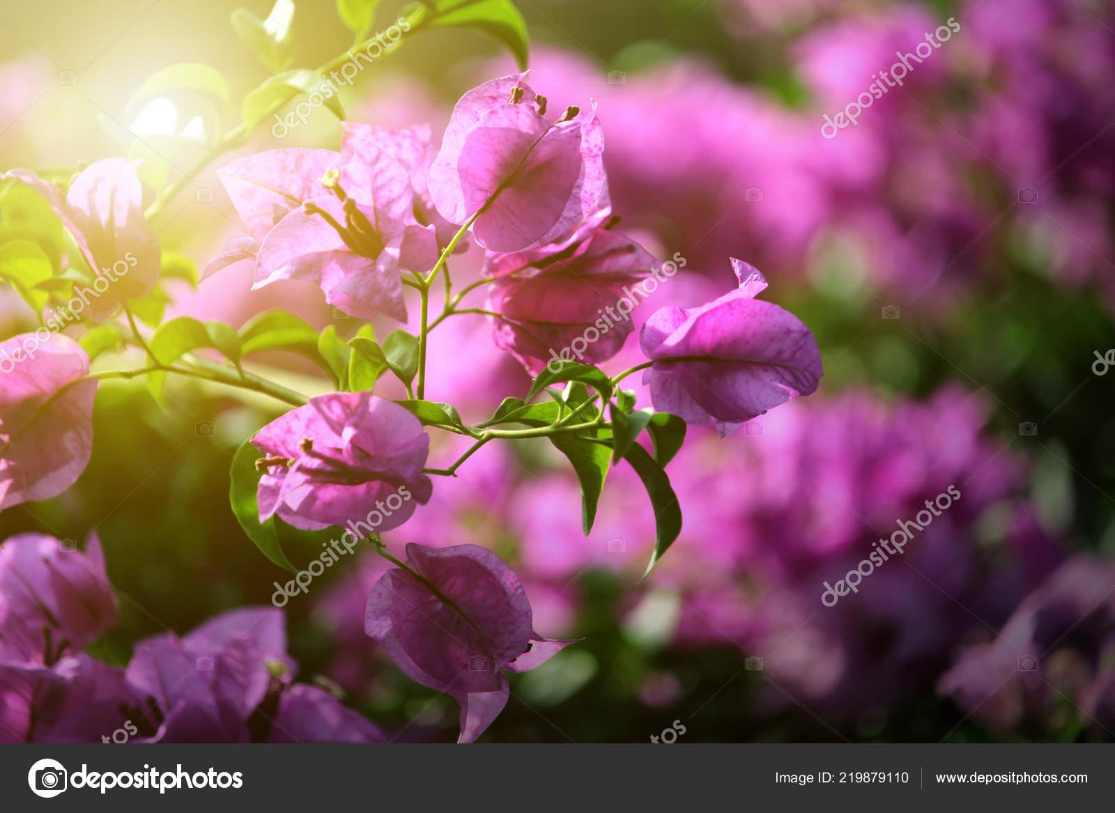 Fleur Nature Vue Feuille Verte Fond Nature Photographie Achirathep