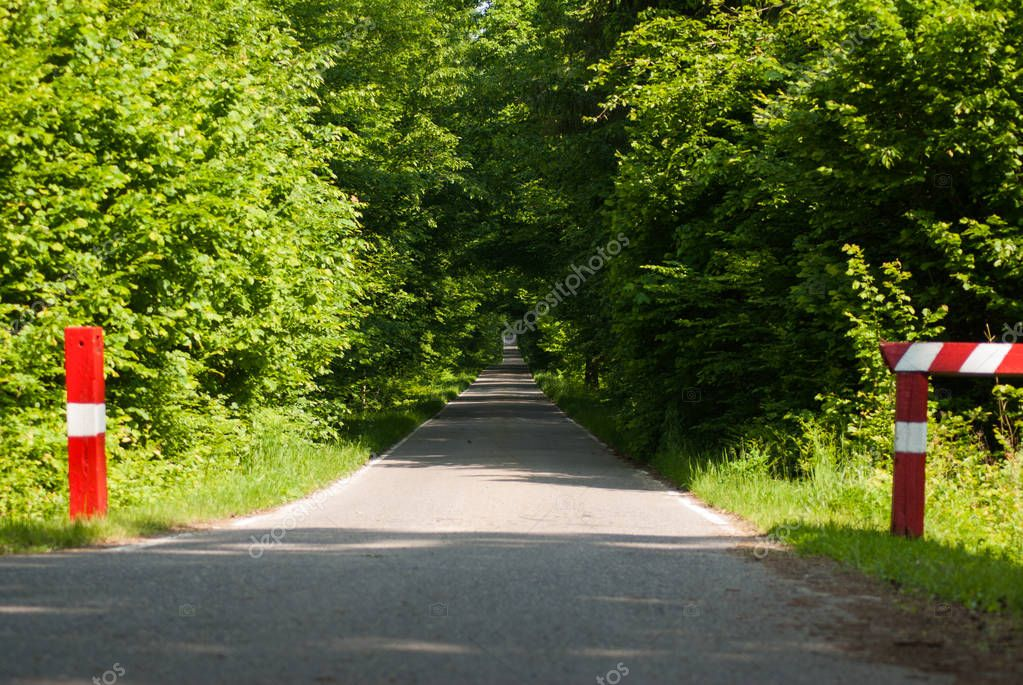 Forest road, bike path in the thicket,