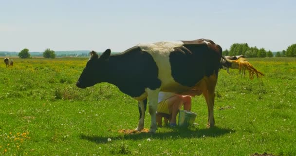 Dojič kravského mléka na zelené louce