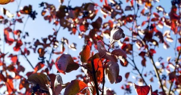 Autunnali foglie colorate sul ramo di un albero. Chiuda in su