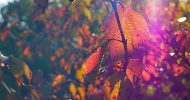 Podzimní barevné listí na větev stromu. Detailní záběr