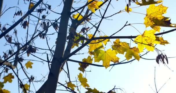 Autumn colorful leaves on tree branch. Close Up.