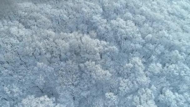 schöne Muster Frost Bäume in weißem Schnee gefroren kalte Wintersaison abstrakte Wald Taiga schwarze Luftlinie fliegt unpassierbar fabelhaft einzigartige natürliche wilde unberührte Landschaft sonniger Tag Luftbildspitze cineastische