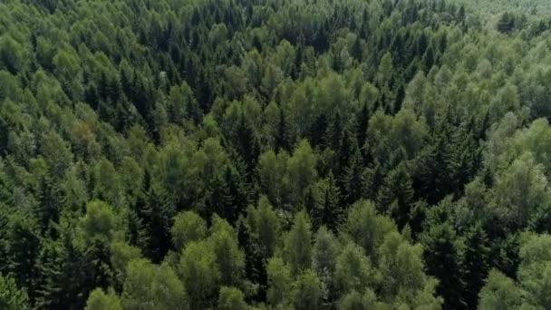 Dron shora dolů malebný les mnoho stromů zelené borovice husté houštiny neprůjezdné taiga volně žijících živočichů nedotčené přírodní park rezervace. Letní jaro. Slunečný den. Krásný nádherný výhled