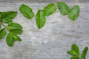 Peppermint leaves on bright old wood with copy space