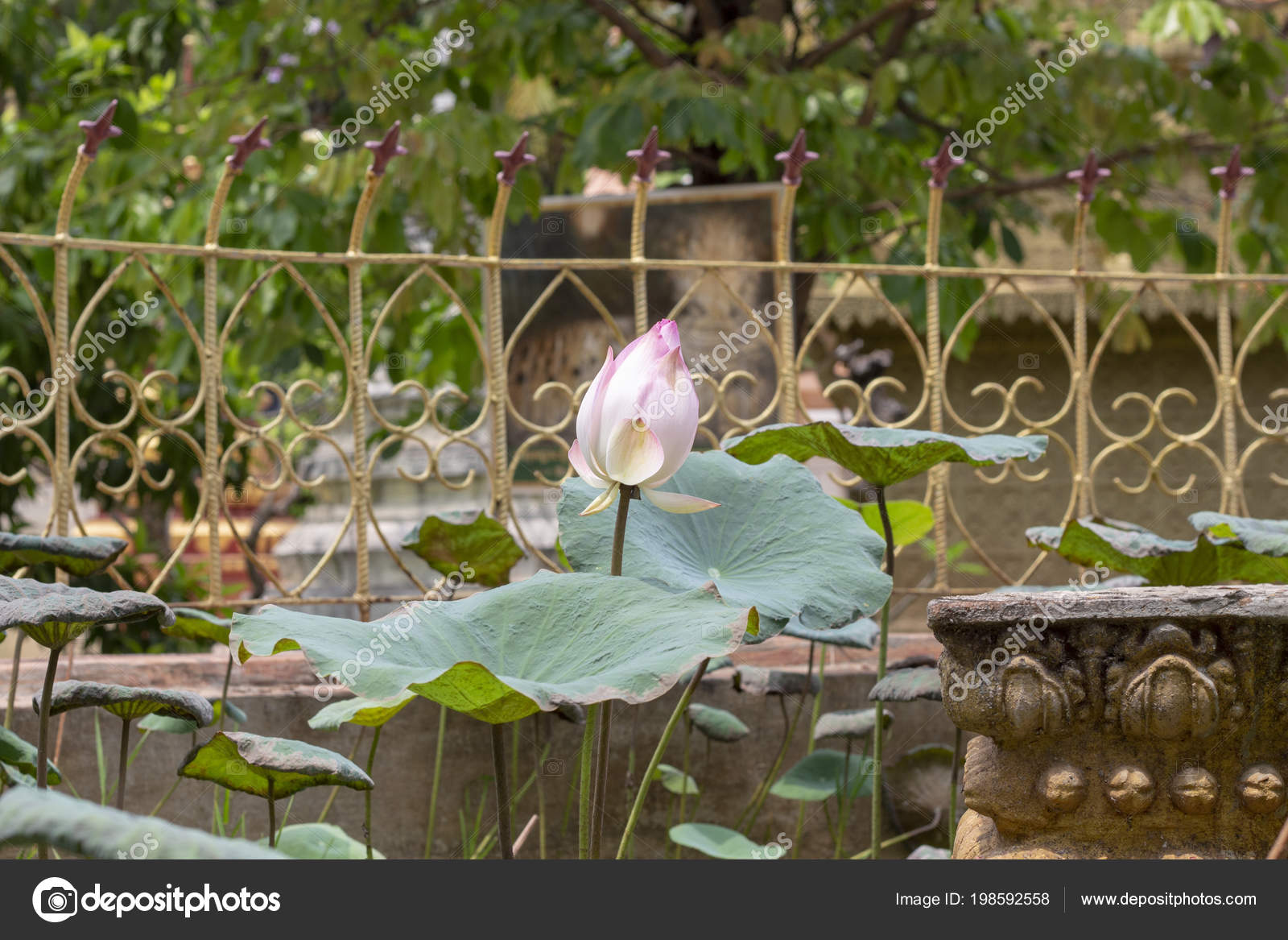 Lotus Flower Buddhism Images Flowers Healthy