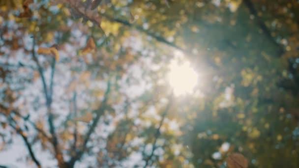 Levelek lehullanak egy fáról, őszi