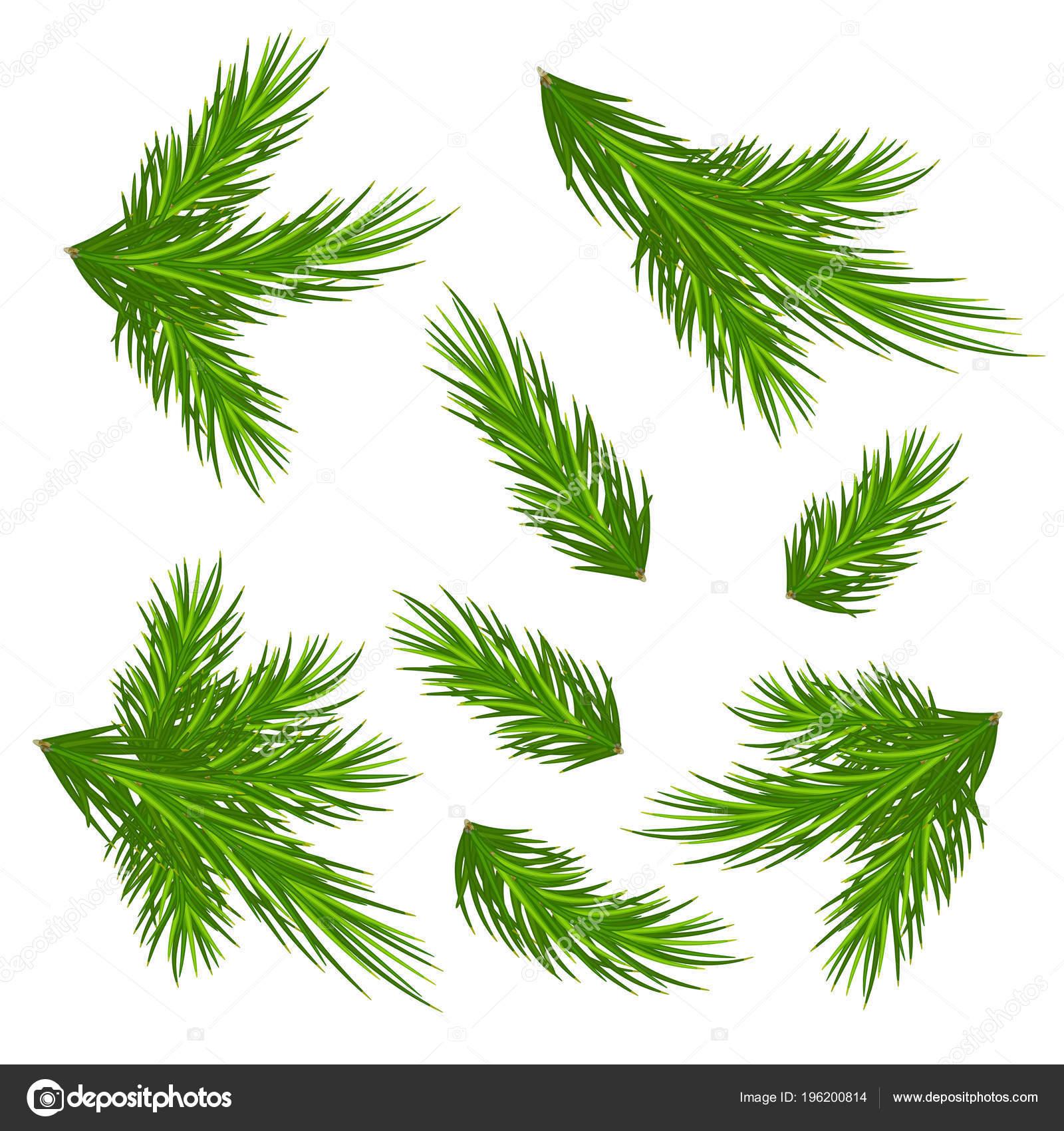 Ramas Los árboles Navidad Aislados Fondo Blanco Sin Sombras