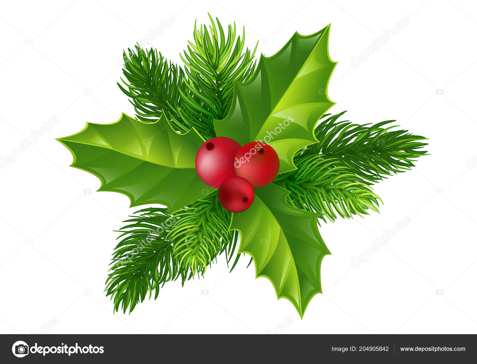 Vector Holly Fir Tree Branches Christmas Ornament Holly