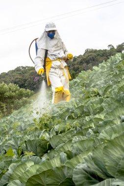 Capao Bonito, Sao Paulo, Brazil, December 18, 2009. Farmer with manual pesticide sprayer in cabbage field