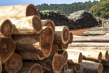 Freshly cut eucalyptus logs await to be cut at a sawmill in Botucatu, SP