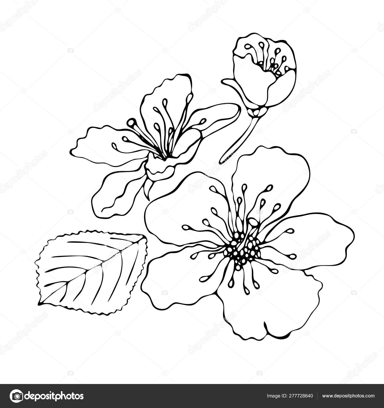 - Floral Coloring Template With Black Line Flower — Stock Vector
