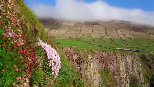 Amazing cliffs at Dingle Peninsula - wonderful landscape