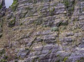 Fényképek A Skellig-szigetek, Írország - a vadon élő állatok Puffin-sziget